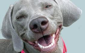 Smiling Dog - Oral Health Dogs