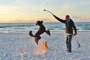 dog-jumping-on-beach