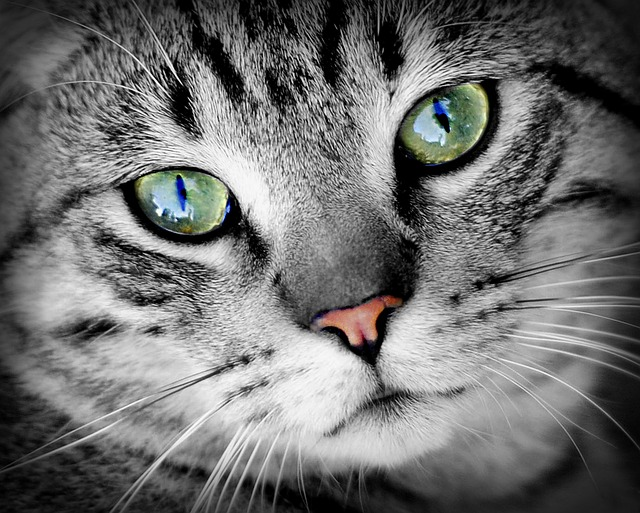 cats eye care - good cat care